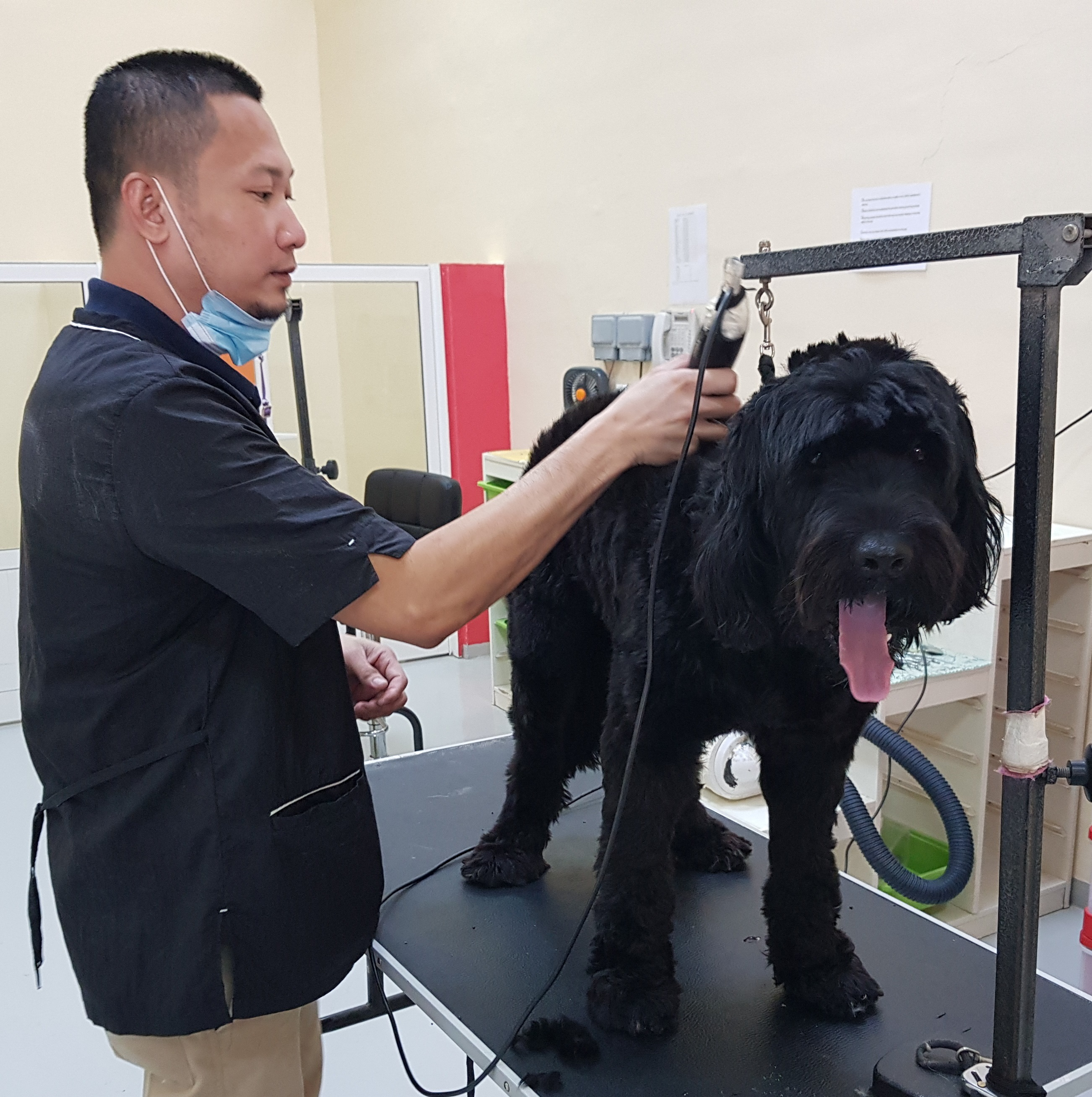 Dog Grooming Services Dubai