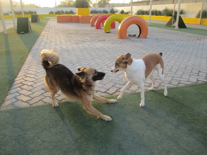 Outdoor Dog Daycare Dubai