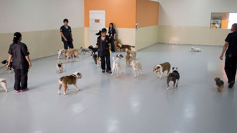 Dog Daycare Dubai