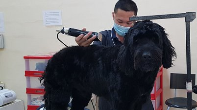 Dog Hair Cut Services Dubai